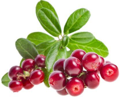 Полезные свойства ягод и листьев брусники.